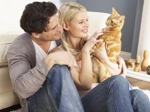 sterilizare pisici
